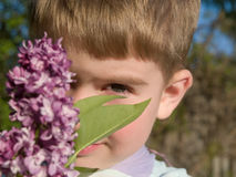 Boy with lilac Stock Photography