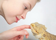 Boy and lizard. Close-up of little boy playing with a pet lizard Royalty Free Stock Photography