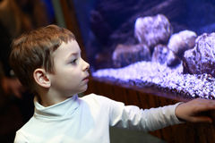 Boy looking at aquarium Royalty Free Stock Image
