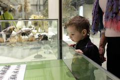 Boy looking at beetles Stock Image