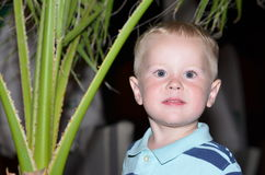 Boy looking at camera on background of palm trees. Portrait Stock Images