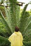 Boy Looking At Large Fern In Forest Stock Images