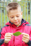 Boy looking at leaf Stock Image