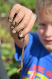 Boy Looking at a Worm on His Hand royalty free stock photo