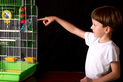 Boy looks at the cage with budgies royalty free stock photos