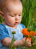 boy looks flowerses royalty free stock images