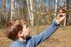 Boy looks at full bud in spring park Royalty Free Stock Images
