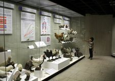 The boy looks at the rabbits at the State Darwin Museum. A series of photos dedicated to the visit of the State Darwin Museum. Includes photographs of the stock photo