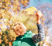 Boy looks on sun light with yellow maple leaf Stock Image