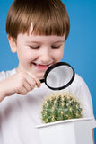 Boy with magnifying glass and cactus Royalty Free Stock Images