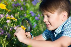 Boy with magnifying glass in summer garden Royalty Free Stock Images