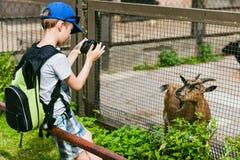 Boy make a photo goats Stock Image