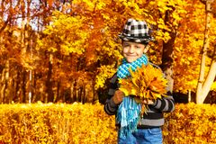 Boy with maple leaves bouquet Stock Photo