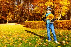 Boy with maple leaves Royalty Free Stock Photo