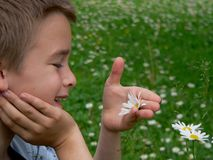 Boy and marguerite Stock Photography