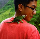 Boy with Maui Green Horned Lizard. Came across this unnamed hiker on a jungle trail in Maui's Iao Valley. The lush greens of the Maui Hawaii Iao Valley jungle royalty free stock image