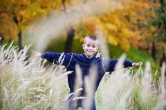 Boy on the meadow Royalty Free Stock Photography