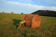 Boy on meadow Royalty Free Stock Photos
