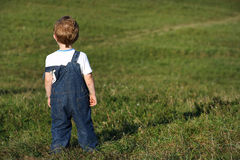 Boy on meadow. Little boy on meadow looking to distance Royalty Free Stock Photos
