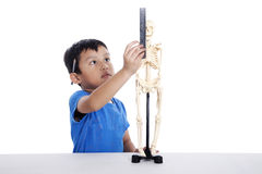 Boy measures a human skull Stock Photos
