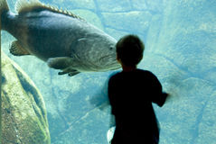 Boy meets big fish Stock Photo