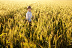 Boy in the middle of wheat fields Royalty Free Stock Photos