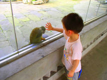 Boy and monkey. A boy and a monkey, divided by a glass wall, are playing together Royalty Free Stock Photography