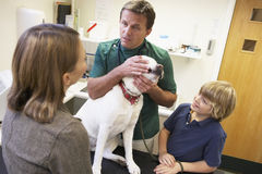 Boy And Mother Taking Dog For Examination By Vet Royalty Free Stock Photos