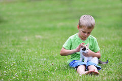 Boy  with motley cat. Boy playing  with motley cat on green grass Royalty Free Stock Image