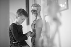 A boy. In a museum near the medical mannequin holding caused interest exhibit Royalty Free Stock Images