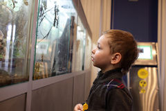 Boy in the museum royalty free stock photo