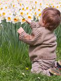 Boy and narcissus Royalty Free Stock Photo