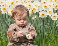 Boy and narcissus Royalty Free Stock Photography