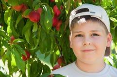 The boy near peach tree Stock Photo