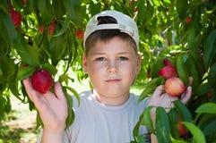 The boy near peach tree Stock Image