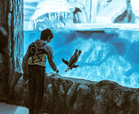 Boy near the penguin aquarium Stock Images