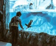 Boy near the penguin aquarium Stock Images
