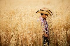 Boy in oat field. A boy walking in an oat field with a hat Stock Photography