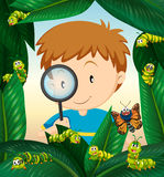 Boy observing insect life on the leaves Royalty Free Stock Image