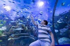 The boy in  Oceanarium considers fish Stock Images