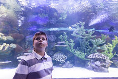 The boy in Oceanarium considers fish Royalty Free Stock Photography