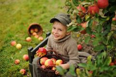 A boy in an orchard. A Little smiling boy in an apples orchard holding a basket with an apples Royalty Free Stock Images