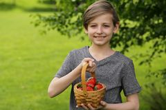 Boy with organic strawberry stock images