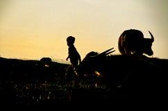Boy and ox- Lake Inle, Burma (Myanmar). Silhouette of boy and ox- Lake Inle, Burma (Myanmar Stock Photography