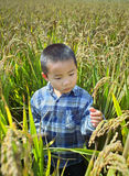 Boy at paddy field Royalty Free Stock Image