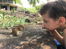 Boy and palm squirrel royalty free stock image