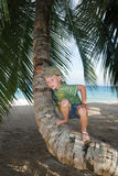 Boy on palm tree Stock Photos