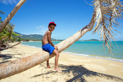Boy on a palm tree Royalty Free Stock Images