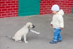 Boy at park Royalty Free Stock Photography