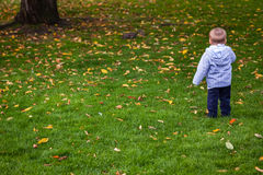 Boy in the park in autumn Royalty Free Stock Photo